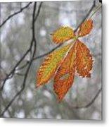 Solitary Leaf Metal Print