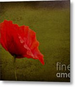 Solitary Poppy. Metal Print
