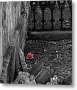 Solitary Rose Metal Print by Renee Barnes