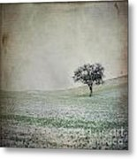 Solitary Tree In Winter. Auvergne. France. Europe Metal Print