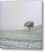 Solitary Tree In Winter Metal Print by Bernard Jaubert