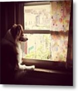 Somewhere In The Distance...a Puppy Metal Print