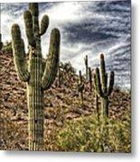 Sonoran Desert II Metal Print
