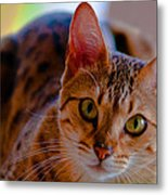 Sookie All Grown Up Metal Print