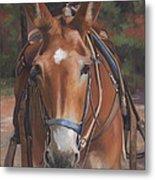 Sorrel Mule Metal Print