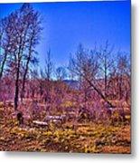 South Platte Park Landscape Metal Print