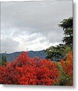 Southern California Fall Metal Print