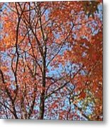 Southern Illinois Maple Metal Print