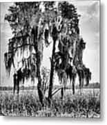 Southern In Black And White Metal Print