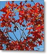Spanish Oak Tree In Texas Metal Print by Rebecca Cearley