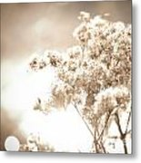 Sparkly Weeds In Sepia Metal Print
