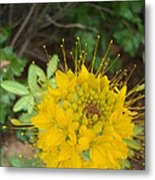 Yellow Bee Plant Sparks Metal Print