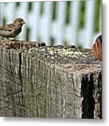 Sparrow And Chipmunk Coexist Metal Print