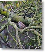 Sparrow Bird Perched . 40d12307 Metal Print
