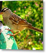 Sparrow In Morning Light  Metal Print