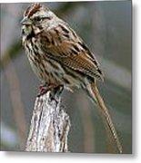 Sparrow Iv Metal Print