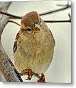 Sparrow On A Twig Metal Print