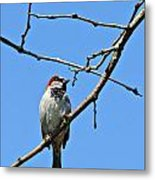 Sparrow On The Branch Metal Print