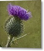 Spear Thistle With Texture Metal Print
