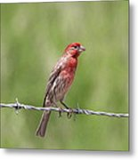 Speckled In Red Metal Print