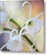 Spider Lily 3 Metal Print