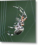 Spider - The Spinner Metal Print