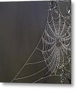 Spider Web Covered In Dew Drops Metal Print