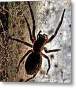 Spiders Home Metal Print