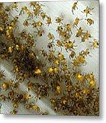 Spiders Spiders Spiders Metal Print
