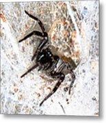 Spiders Trap Metal Print