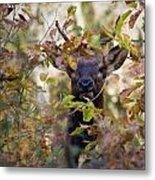 Spike Elk In Brush Metal Print