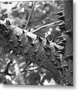 Spiked Limbs Metal Print