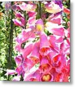 Spikes Of Pink Foxgloves Metal Print