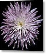 Spiky Flower Metal Print