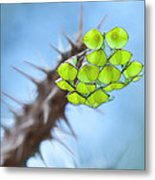 Spiny Beauty Metal Print