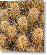 Spiny Prickly Sharp Metal Print
