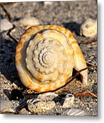 Spirals From The Sea Metal Print