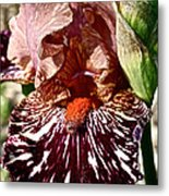 Splattered Iris Metal Print