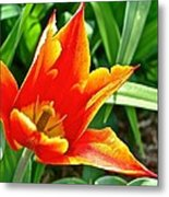 Splendor Of Spring Metal Print