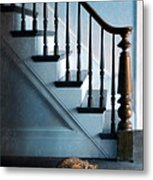 Spooked Cat By Stairs Metal Print