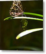 Spotted Beauty Metal Print by Leslie Leda