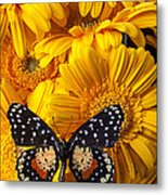 Spotted Butterfly On Yellow Mums Metal Print