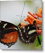 Spotted Tiger Glassywing Metal Print