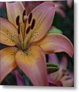 Spotty Lily Metal Print