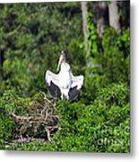 Spread Stork Metal Print