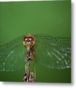 Spread Your Wings And Fly Away Metal Print
