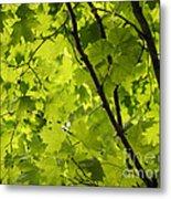 Spring - Beneath The Great Maple Metal Print