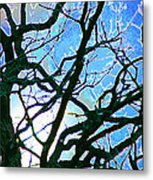Spring Approaches Metal Print