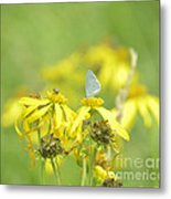 Spring Azure And Friend Metal Print