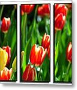 Spring Beauty Triptych Series Metal Print